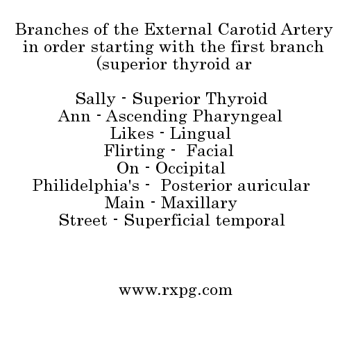 Branches of the External Carotid Artery in order starting with the ...