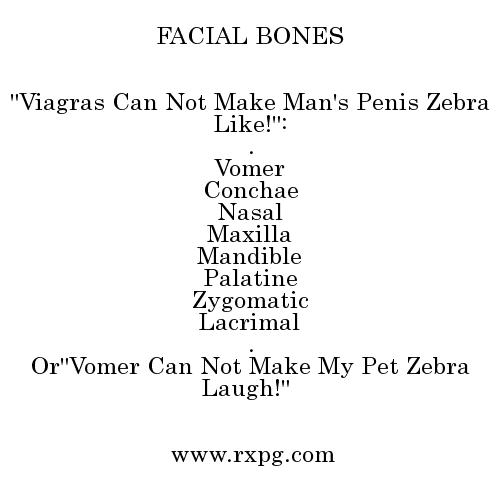 facial bones mnemonics, Human Body